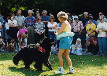 Newfoundland dog doing freestyle