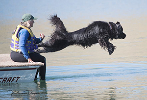 water work with Newfoundland dogs